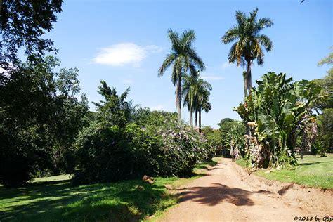 Botanischer Garten Entebbe entebbe botanischer garten afrifant die erg 228 nzung zu