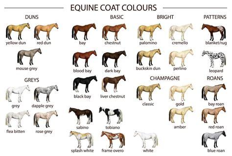 color coat equine coat colours equishop equestrian shop