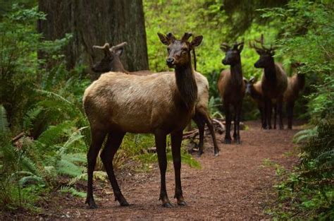 location bureau orleans redwood national park photos featured images of redwood