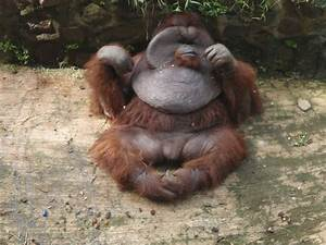 Really Ugly Animals - Snaprequest.com