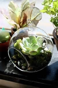 Succulent Terrarium Glass Containers