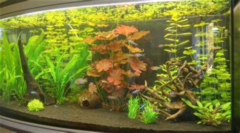 choix de plantes pour un aquarium sans substrat ni engrais
