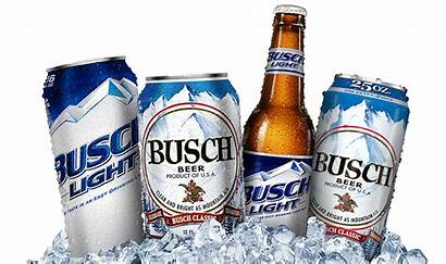 Beer Busch Brands Beers Popular Bud Chinese