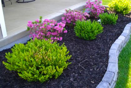 top plants  landscaping   planting ideas