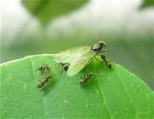 Ameisen Mit Flügel : 4teachers lehrproben unterrichtsentw rfe und unterrichtsmaterial f r lehrer und referendare ~ Buech-reservation.com Haus und Dekorationen