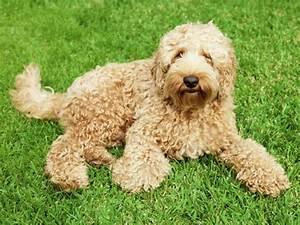 Anti Allergie Hund : hunde f r allergiker gibt es das ~ Orissabook.com Haus und Dekorationen