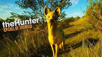 Call Africa Wild Kangaroo