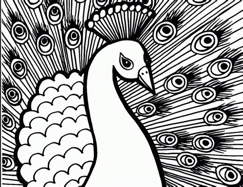 peacock pictures  print coloring home