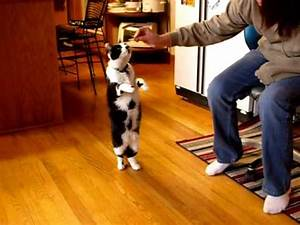 Cat Walking on Hind Legs! - YouTube