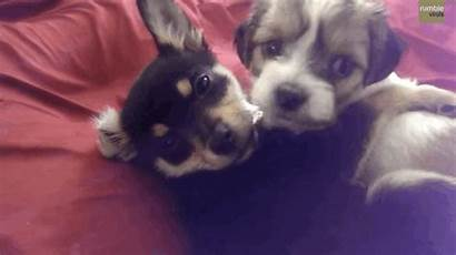 Puppy Puppies Kisses Hugs Never Let Waking