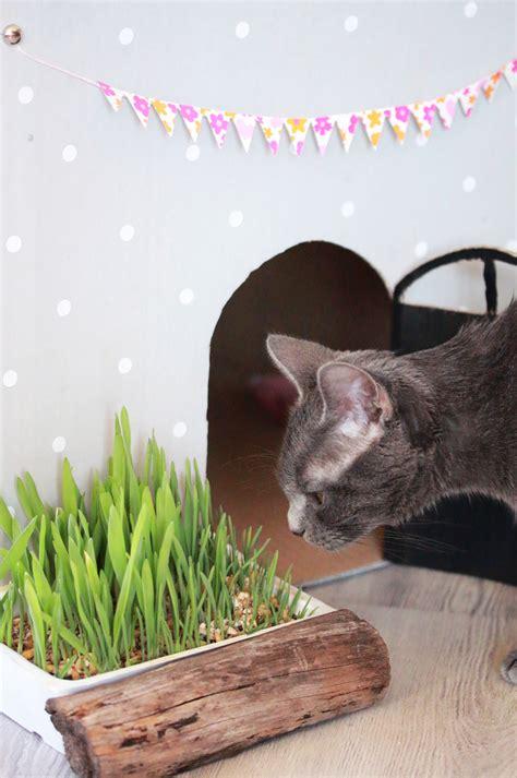 diy 28 la maison de poup 233 e pour mon ptit chat sp4nk