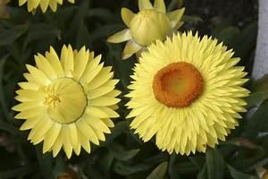 Die Schönsten Balkonpflanzen : balkonpflanzen pflanzen und pflegen mein sch ner garten ~ Markanthonyermac.com Haus und Dekorationen