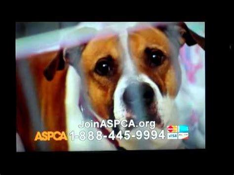 aspca animal cruelty commercial   roberta flack