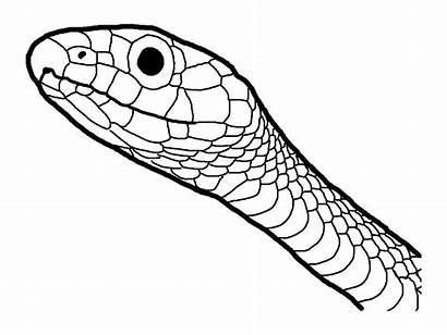 Coloring Snake Pages Reptile Amphibian Pdf Drawing
