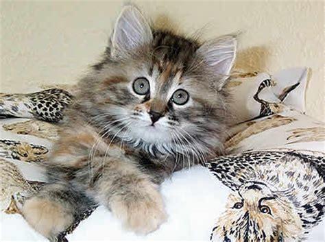 hannoverscher katzen club ev eine neue katze kommt ins