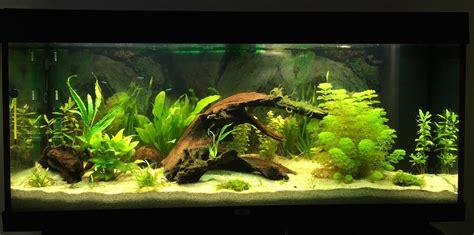 aquarium eau douce 240