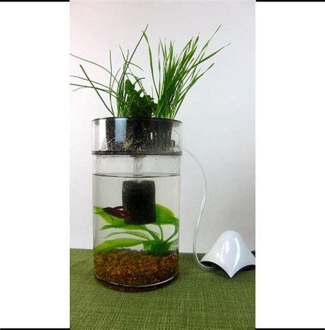 indoor herb garden betta fish tank aquaponics