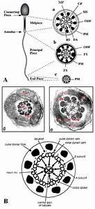 Frontiers In Bioscience 11  1433