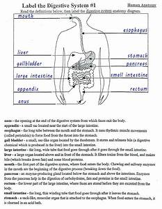 30 Digestive System Diagram To Label