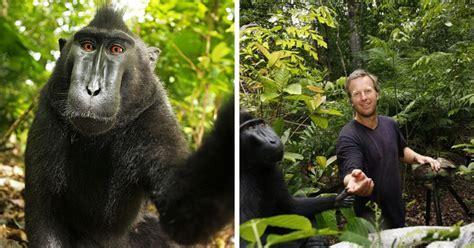 PETA Sues 'Monkey Selfie' Photographer For A Ridiculous