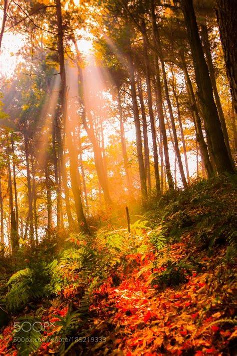 images  beautiful autumn  pinterest autumn
