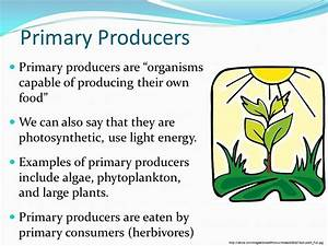 Producers Plants Examples