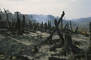 Slash And Burn Agriculture, Where Photograph by Konrad Wothe