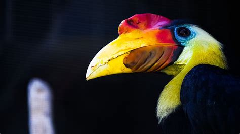 hornbills  borneo blog   animals