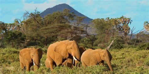 The Kenya Exotic Safari - Peaks Of Africa