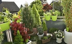Winterharte Pflanzen Für Balkonkästen : balkon gestaltung mit pflegeleichten immergr nen balkon terrasse pinterest balkon ~ Orissabook.com Haus und Dekorationen