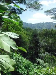 Hawaiian Tropical Rain Forest