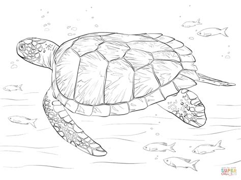 How Do You Draw A Sea Turtle Green Sea Turtle Coloring