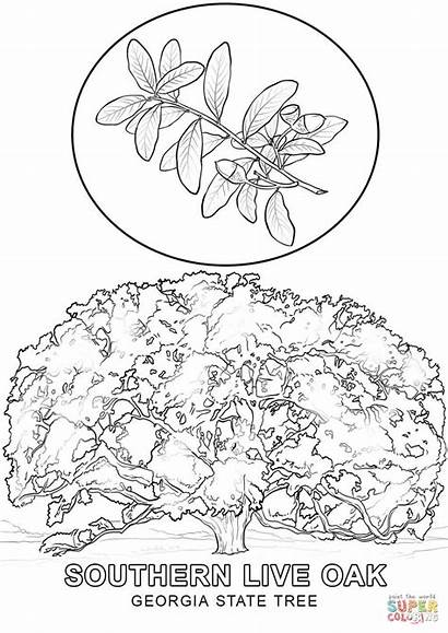 Georgia Coloring State Tree Pages Drawing Printable