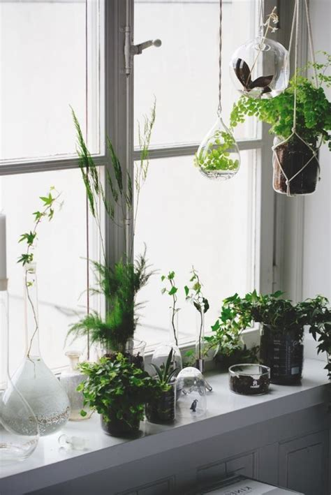 Plants For Window Sills by Decoration 57 Ideas As You Discover The Potential Of