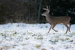 How To Deer Hunt In December
