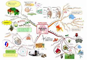 Respiratory System mind map   Science Mind Maps ...