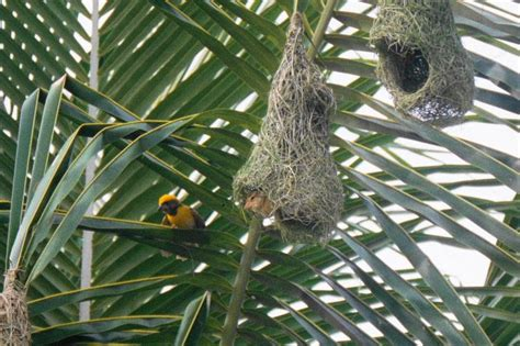 nests of birds pictures abcs of animal world the most beautiful and spectacular nests in the world