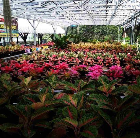 Rainbow garden merupakan taman bunga yang tak boleh dilewati bagi pecinta bunga. Taman Bunga Kaduhejo Pandeglang : Berbunga Bunga Di Taman Bunga Nusantara / Destinasi wisata ...