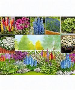 Parterre De Plante : achetez maintenant une plante vivace parterre vivaces 7 var ~ Melissatoandfro.com Idées de Décoration