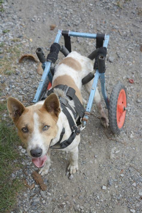 walking sling   dog animals momme