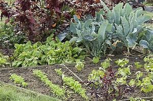 Plantes Amies Et Ennemies Au Potager : l gumes pour potagers en miniature ~ Melissatoandfro.com Idées de Décoration