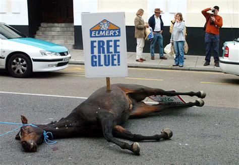 horse dead glue beating