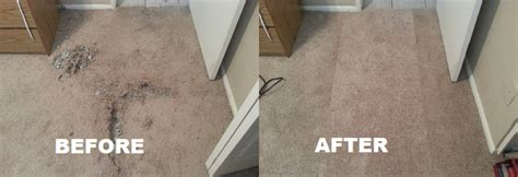 Category Pets  Carpet Chris Carpet Repair 4805778850