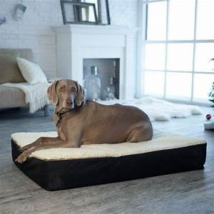 snoozer large super orthopedic senior dog bed green with With best dog beds for senior dogs