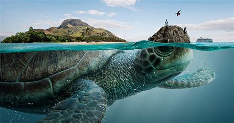 majestic sea animals bear   biospheres  ecuador