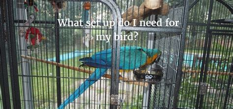 macaw parrot toys uk wow blog