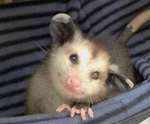 happy possum | creature comforts | Pinterest