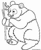 Coloring Panda Printable Pages Eating Animal sketch template