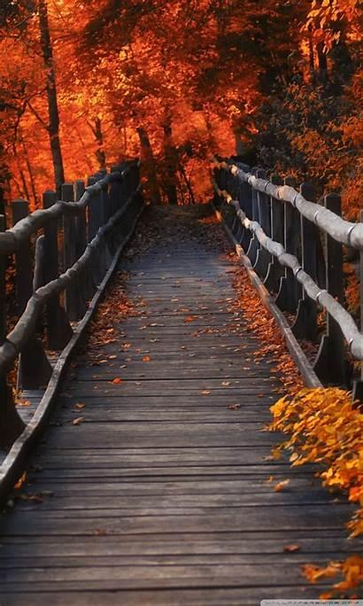 Autumn Nature Orange Brown Trees 4k Dock