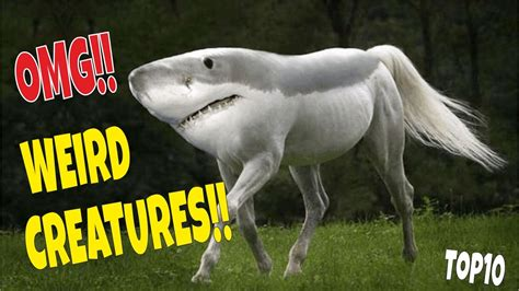 Weirdest Most Amazing Creatures Ever On Earth TOP 10
